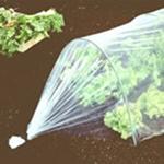 5 astuces simples pour prot ger votre jardin en hiver - Cloche en plastique transparent jardin ...