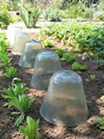 Pots de terre ou bouteilles en plastique