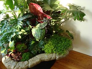 5 plantes pour d corer l 39 int rieur de votre maison les conseils. Black Bedroom Furniture Sets. Home Design Ideas