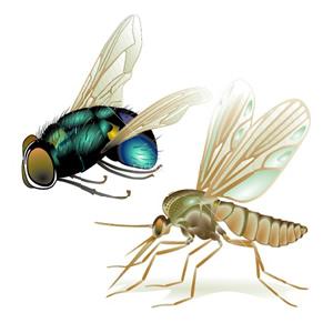 se-debarasser-des-insectes