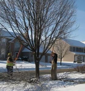 proteger-arbres-hiver