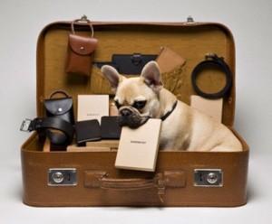 voyager-chien